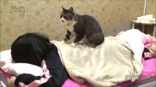 Japanese spa offers the option of a back massage from a cat