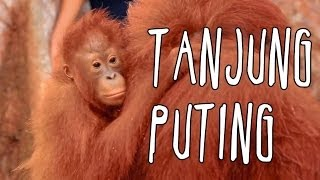 [INDONESIA TRAVEL SERIES] Jalan2Men 2014 - Tanjung Puting - Episode 1
