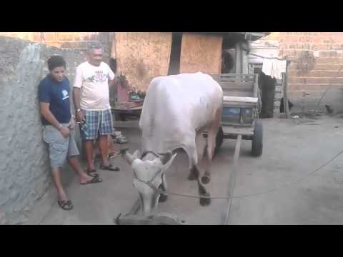 Intelligent COW