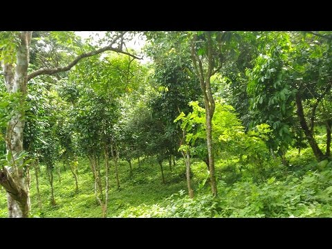 LIPA BATANGAS RANCH/FARM LOT FOR SALE