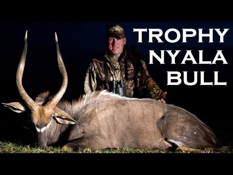 Hunting the elusive and beautiful Nyala in South Africa
