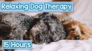 NEW, IMPROVED Relaxing Music for Dogs! Calm Your Energetic Dog with this Soothing Music (2018) 🐕💤