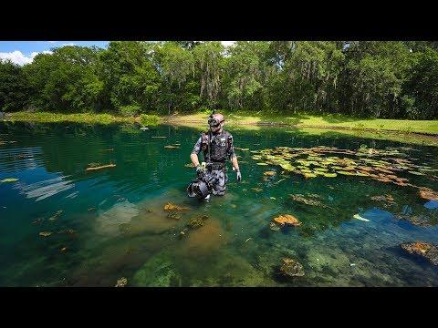 Xxx Mp4 Treasure Hunting Subdivision Pond With Alligators And BIG Fish Underwater Surprise 3gp Sex