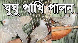 Dove Farming | Dove farming |