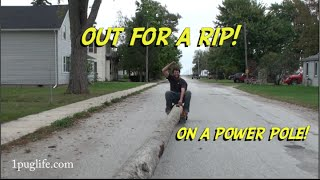 Easiest way to move 100' poles
