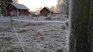 [Bonus] Magical Morning - Ice Cristal Sound in The Air & Shaking Wire