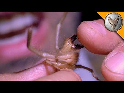Ahhh Camel Spider Chews My Finger