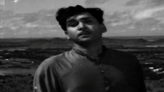 Sumangali || Sigaloki Viru Lichi Cheli Nosata Video Song || ANR, Savitri