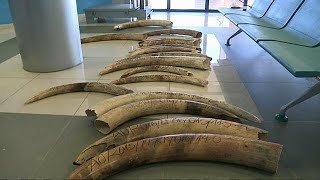 UK government to introduce strict ivory ban