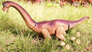 Dinosaur Walking and Laying Eggs Toy ! Dinosaurs Toys For Kids. Brachiosaurus