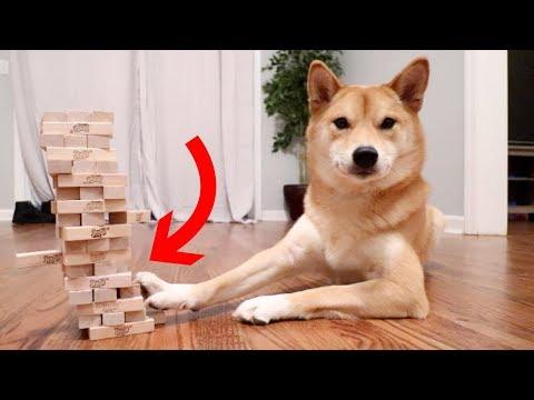 Xxx Mp4 DOG KNOWS HOW TO PLAY JENGA 3gp Sex