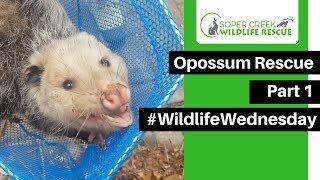 Opossum Rescue Part 1
