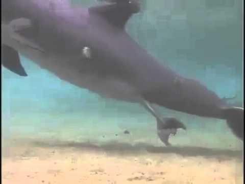 Xxx Mp4 Dolphin Beranak 3gp Sex