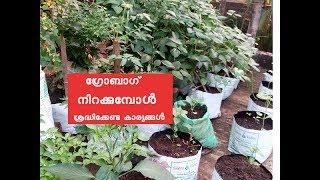 ഗ്രോബാഗ് നിറക്കുമ്പോൾ ശ്രദ്ധിക്കേണ്ട കാര്യങ്ങൾ How to fill grow bag