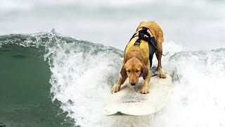 SURFING DOGS ★ Word