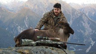 Tahr Hunting NZ July 2016