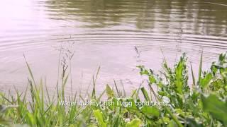 NOUVEAU : Dans les coulisses du caviar Sturia | FILM INSTITUTIONNEL