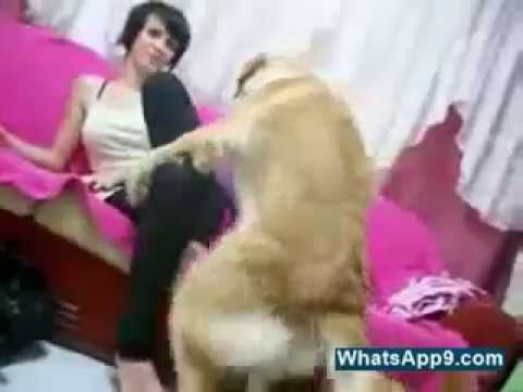 Xxx Mp4 Funny Dog Trying To Girl 3gp Sex