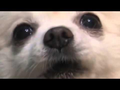 Xxx Mp4 Dog Dog 3gp Sex