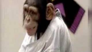 kissing monkeys(very funny)