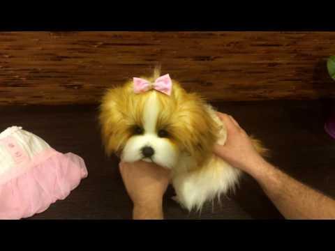 Xxx Mp4 Puppy Gina 3gp Sex