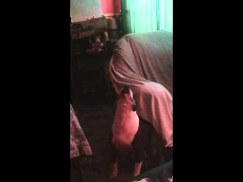 Xxx Mp4 ♥mona Lisa Snowdrop Morning Rubba Dub Dub Pmsl 3gp Sex