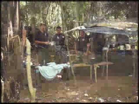 REPORTAGEM SOBRE A AMAZÔNIA LEGAL E ILEGAL.