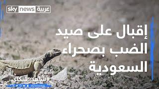 إقبال على صيد الضب بصحراء السعودية
