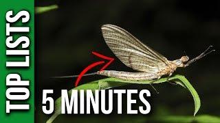 5 Shortest Lived Species