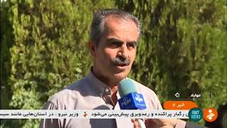 Iran Mechanized Wheat harvest, Mahabad county برداشت مكانيزه گندم شهرستان مهاباد ايران