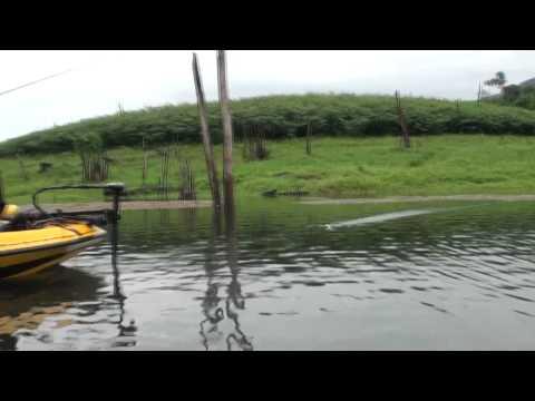 ปลาช่อนกัดระเบิด YOUTUBE H.264 HD Video.mp4