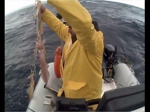 squid ΚΑΛΑΜΑΡΙΑ Ν1 ΜΕ ΑΡΚΕΤΟ ΚΑΙΡΟ.sotos fishing wmv