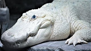 15 Most Bizarre Reptiles