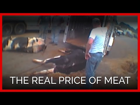 The REAL Price of Meat One Cow s Heartbreaking Trip to Slaughter
