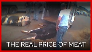 The REAL Price of Meat | One Cow's Heartbreaking Trip to Slaughter