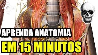 APRENDA ANATOMIA HUMANA EM 15 MINUTOS - Vídeo Aula 133 -