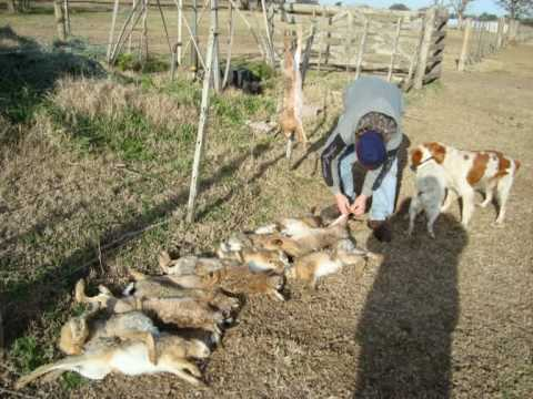 caza de liebres y perdices