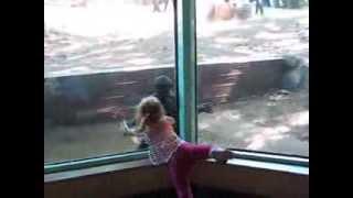 Little girl Kyla kisses baby gorilla- part 2- original video taken by family
