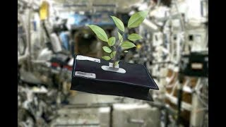 Space Plants - How Are They Adapting?
