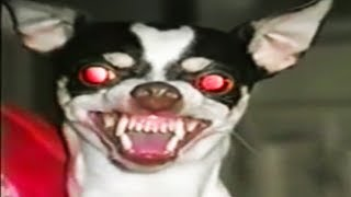 Top 15 Scariest Things PETS Have Done