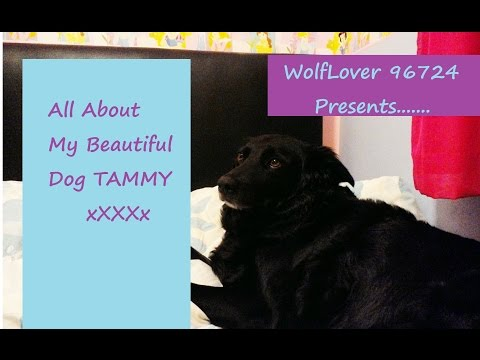 All About My Beautiful Dog TAMMY xXXXx