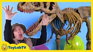 Jurassic World Dinosaur Toy & Easter Egg Hunt with Kids Surprise Toys Opening of T-Rex