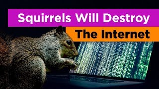 Why Squirrels Are the Greatest Threat to the Internet (Feat. Tierzoo)