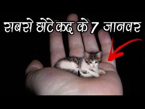 दुनिया के सबसे छोटे कद के 7 जानवर | 7 Smallest Animals In The World| Indian Mysteries