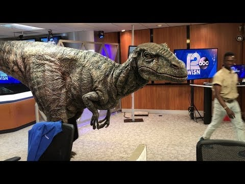 Raptor visits WISN 12 newsroom
