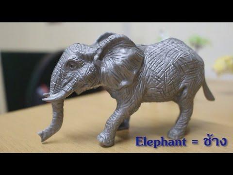 สัตว์ต่างๆ ในภาษาอังกฤษ สวนสัตว์ เพลงช้าง เพลงเด็ก นิทาน สัตว์น่ารัก