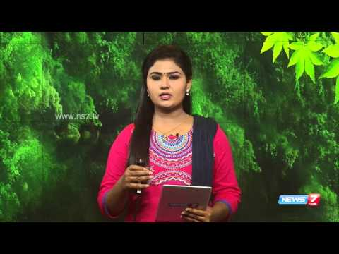 School girl dies of dengue fever in Vellore | Tamil Nadu | News7 Tamil