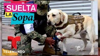 Carlos Member describió su experiencia en el terremoto de México | Suelta La Sopa | Entretenimiento