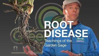 Root Disease - The Garden Sage 12