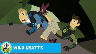 WILD KRATTS   Indian Mongoose!   PBS KIDS